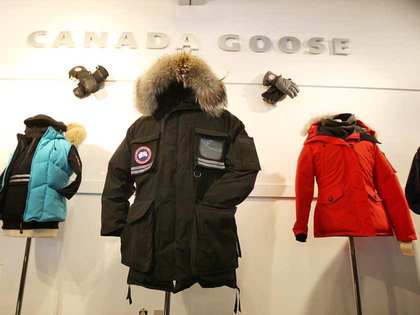 1-canada-goose-